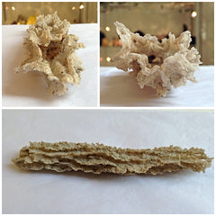 Venusrox Fulgurite USA at the London Crystal Showroom