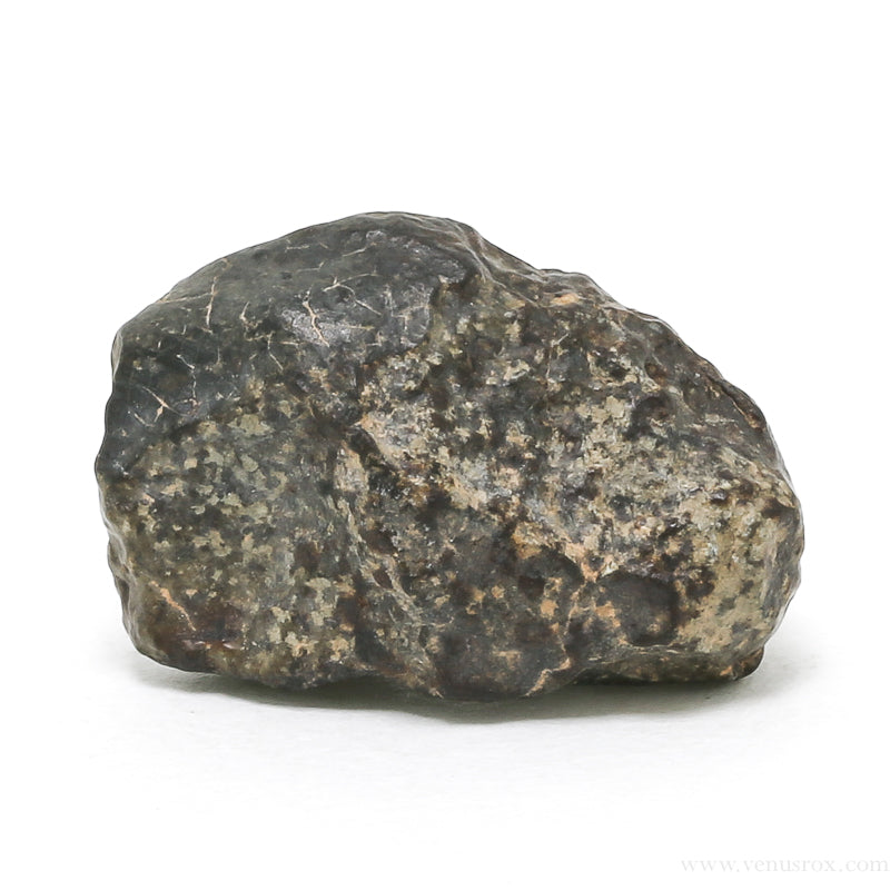 Classified (#NWA 869) Chondrite Meteorite Fragment from the Sahara Desert, North-West Africa | Venusrox