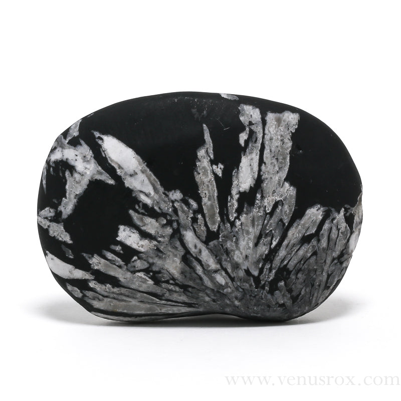 Chrysanthemum Stone from China | Venusrox