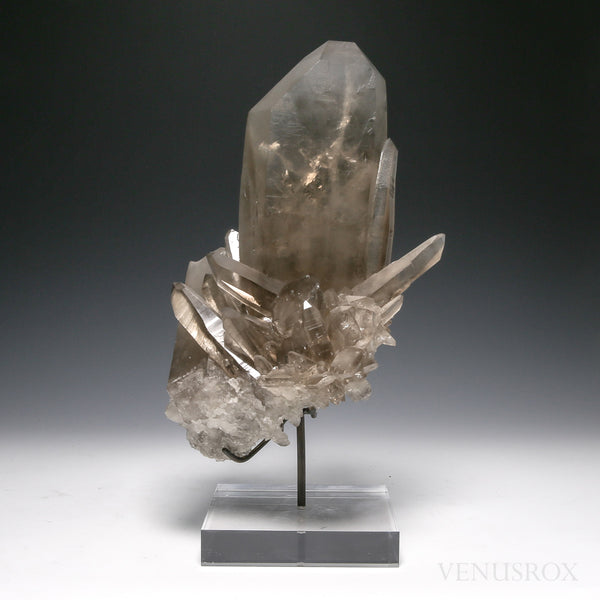 Smoky Lemurian Quartz Natural Cluster from Brazil mounded on a bespoke stand | Venusrox