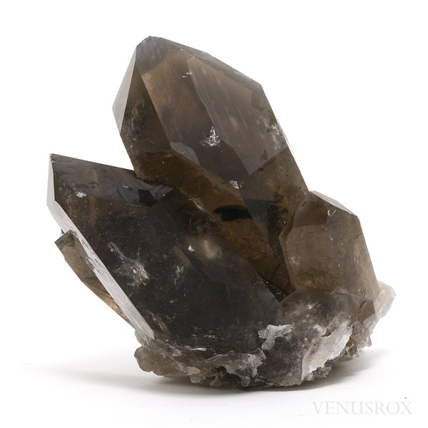 Smoky Quartz with Golden Rutile Natural Cluster from Brazil | Venusrox
