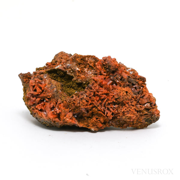 Crocoite Natural Crystals on Matrix Specimen from the Red Lead Crocoite Mine, Dundas Mineral field, Zeehan, NW Tasmania | Venusrox
