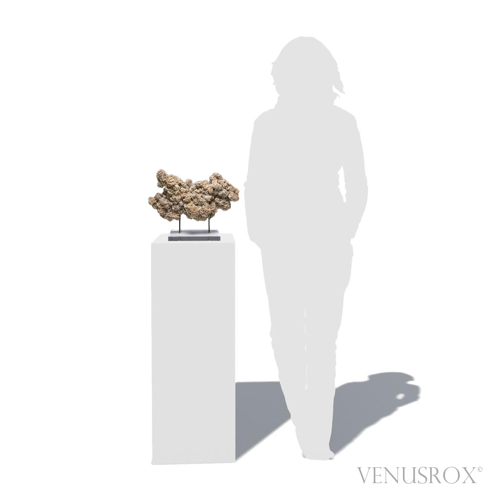 Desert Rose Natural Crystal from Mexico mounted on a bespoke stand | Venusrox