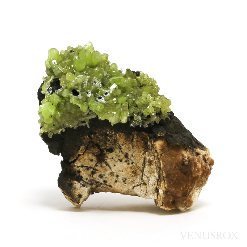 Green Pyromorphite on Matrix Natural Cluster from Daoping Mine, Guangxi Zhaung Autonomous Region, China | Venusrox