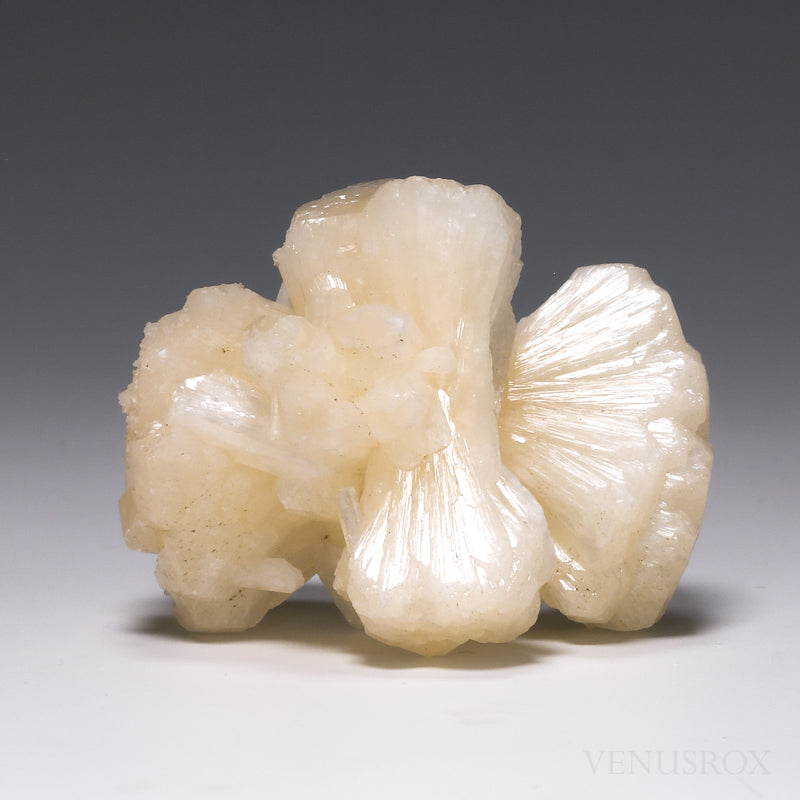 Stilbite Natural 'Bow-tie' Cluster from India | Venusrox
