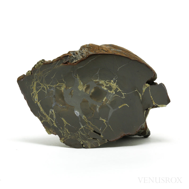 Septarian with Pyrite Part Polished/Part Natural Crystal from Vöhrum, Germany ​| Venusrox