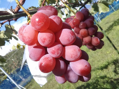 YAMANASHI QUEEN NEENA GRAPE - SOFruitsg | Singapore's Premier Fruit Delivery