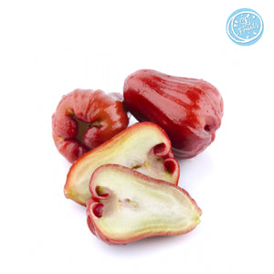 JAMBU WAX APPLE (THAILAND) - SOFruitsg | Singapore's Premier Fruit Delivery
