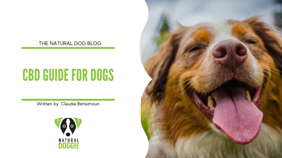 CBD Guide for Dogs