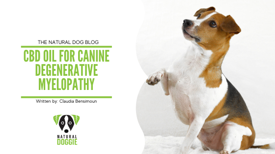 CBD Oil for Canine Degenerative Myelopathy