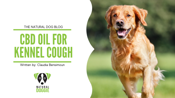CBD Oil for Kennel Cough