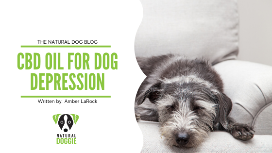 CBD Oil For Dog Depression
