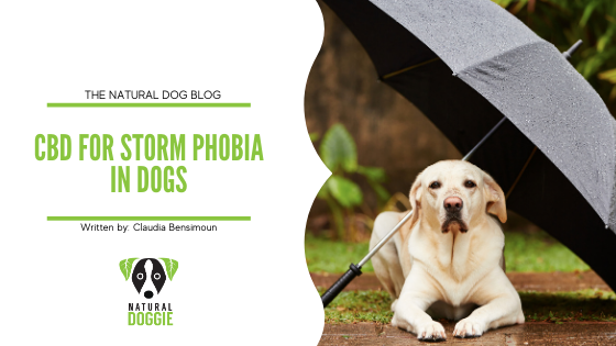 CBD for Storm Phobia in Dogs