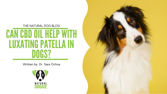 Can CBD Oil Help with Luxating Patella in Dogs?