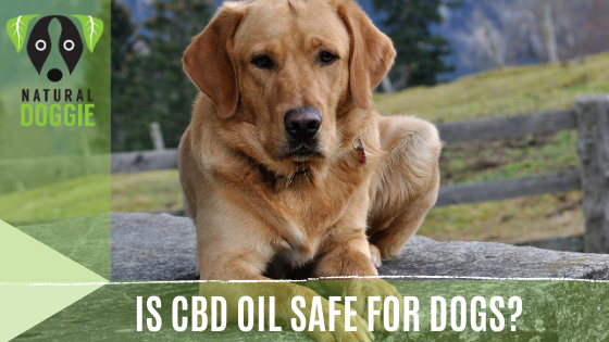 Is CBD Safe for Dogs?