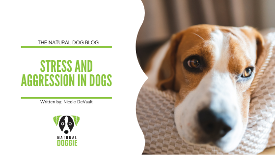 Stress and Aggression in Dogs