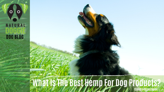 What is the Best Hemp for Dog Products?