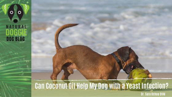 Can Coconut Oil Help My Dog with a Yeast Infection?