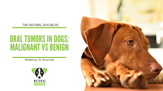 Oral Tumors in Dogs: the Differences Between Malignant and Benign