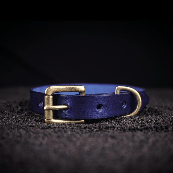 small traditional dog collar in blue leather