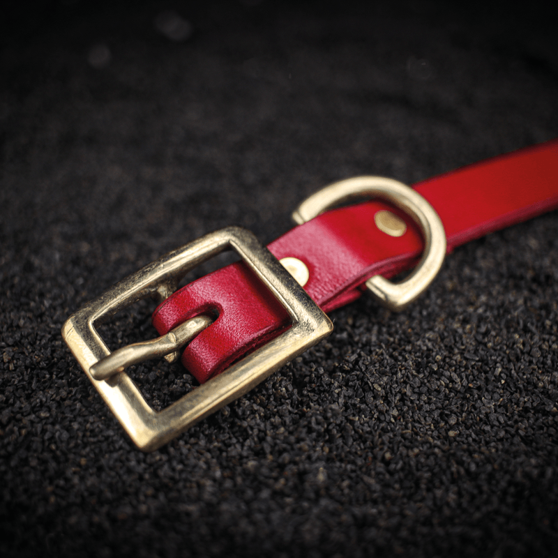 Traditional Dog Collar - Extra Small
