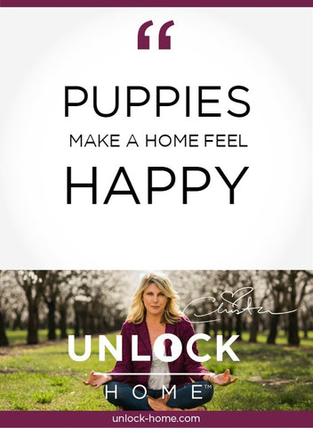 unlock-home-weekly-happy-puppies