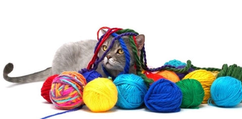Cute cat surrounded by colorful balls of yarn