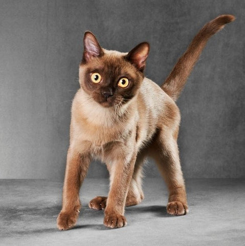 Young cat cat with tail help high