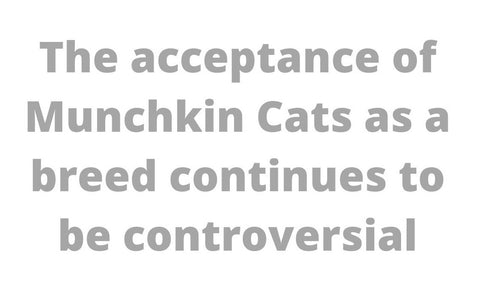 The Munchkin Cat controversy quotation