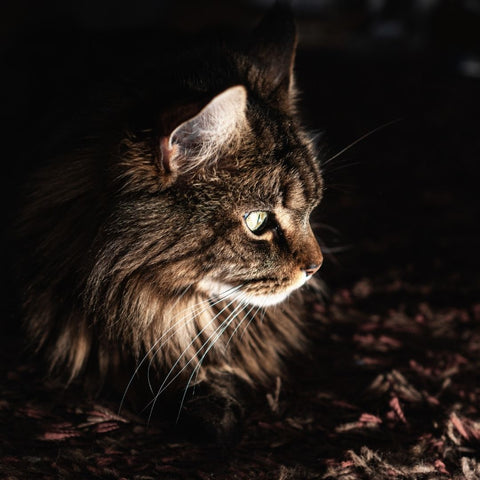 Picture of a cat at night for blog asking are cats nocturnal