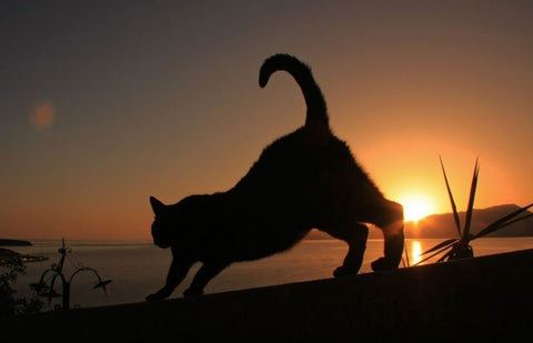 A silhouette of a cat  running at dawn with the sun in the background