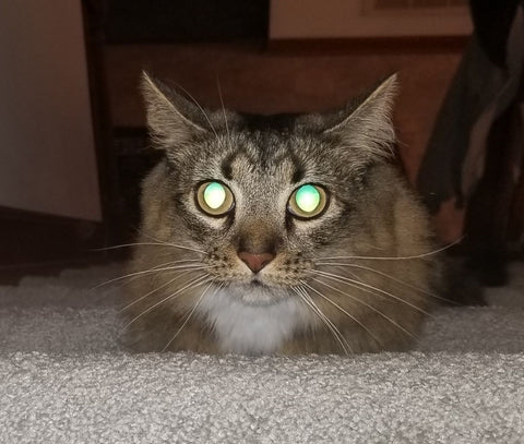 Cat in a dark house with glowing eyes