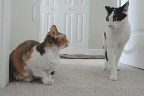 Two cats avoiding conflict