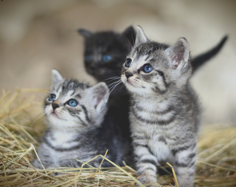 Four reasons why cats purr kittens