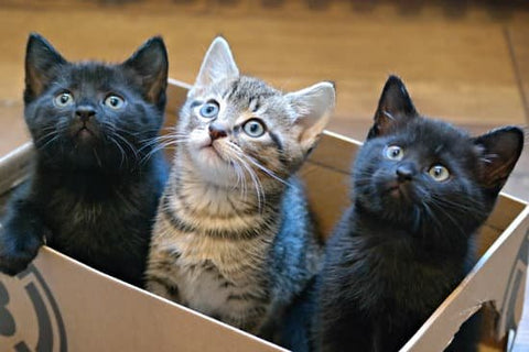 three cats who love boxes