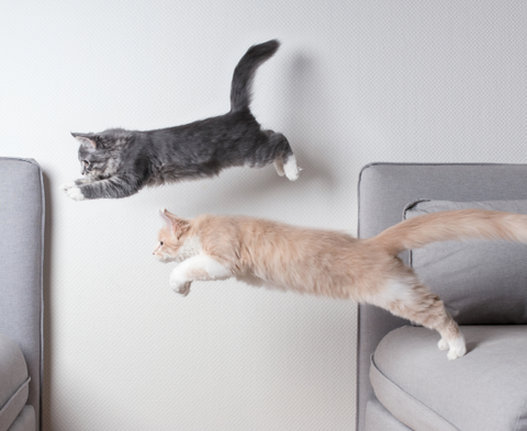 Four reasons why cats purr cats leaping