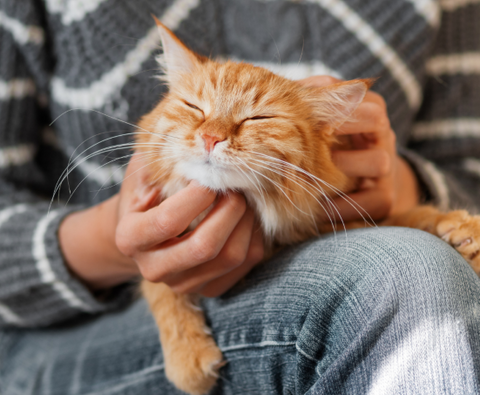 Why Cats Purr is because they are contented
