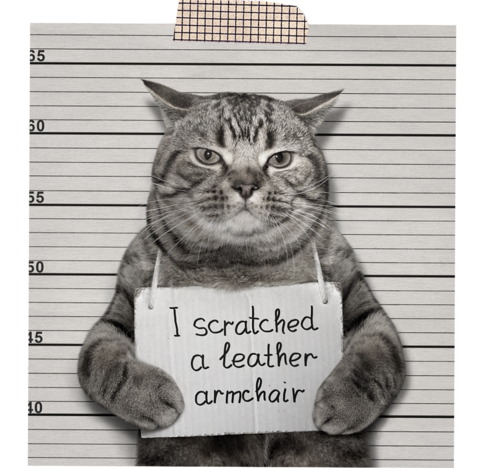 Funny looking cat holding a sign saying he scratched a leather chair