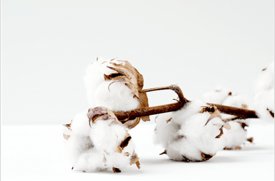 Is Cotton Harming Your Health?