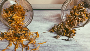 Calendula and Chamomile: Herbs Worth Knowing