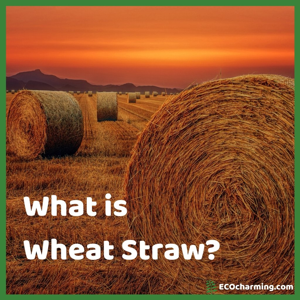What is Wheat Straw?