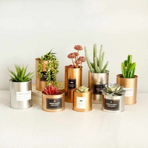 Metal Can Cylinder | DIY Plant Holder / Desk Organizer - ECOcharming.com