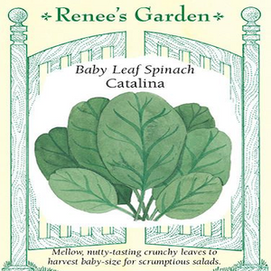 SPINACH CATALINA BABY LEAF