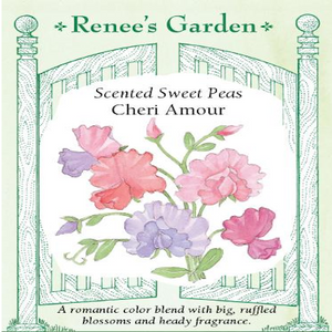 SWEET PEA CHERI AMOUR BOUQUET