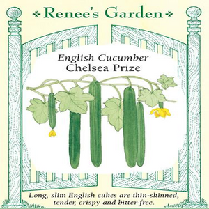CUCUMBER CHELSEA PRIZE