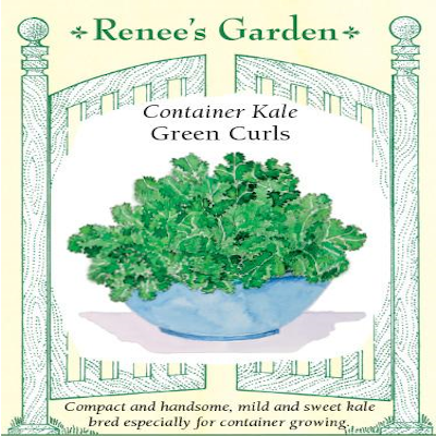 KALE CONTAINER GREEN CURLS