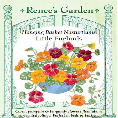 NASTURTIUM CONTAINER LITTLE FIREBIRDS