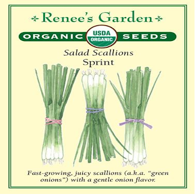 ONION SCALLIONS SPRINT ORGANIC