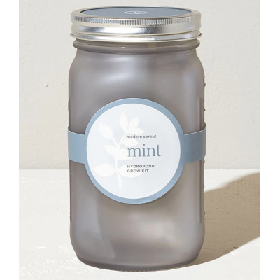 Mint garden herb jar