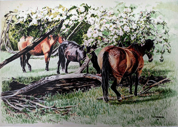 Group of Pack Horses resting Under the Apple